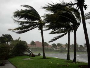 natural disaster winds through palm trees